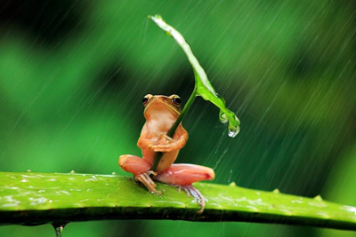 Weather in the Amazon Rainforest